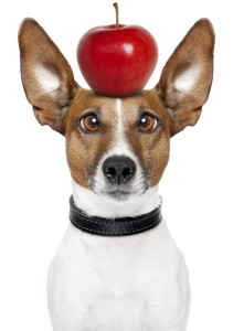Dog with apple on head